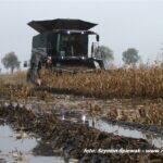 IS DSCF0573 150x150 New Holland CR 9.90 Revelation w kukurydzy   FOTO