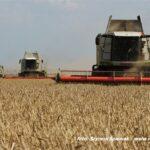 IS DSCF9448 150x150 Fendt IDEAL w ekstremalnym zbiorze kukurydzy   FOTO